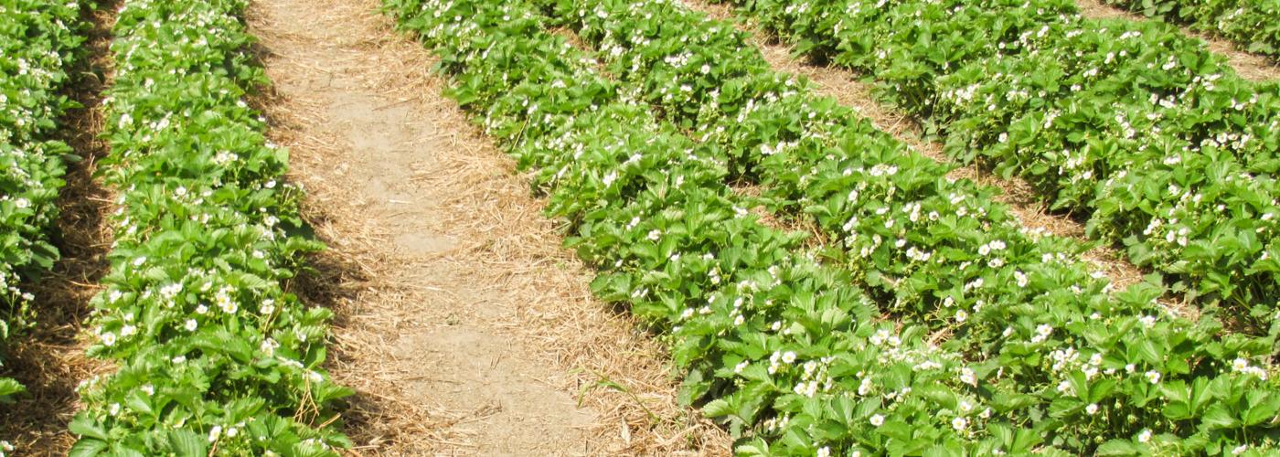 Prodotti per l'Agricoltura e Giardinaggio